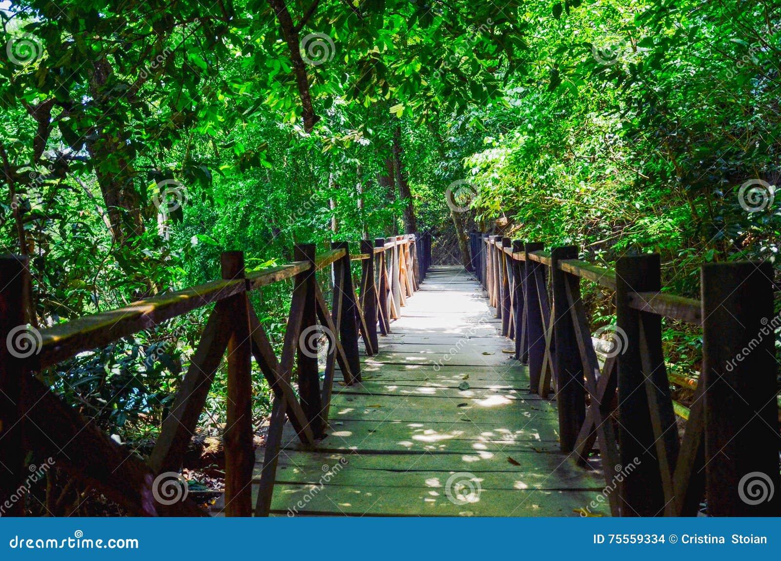 Parque natural del EL Chiflon, Chiapas, México 25 de mayo