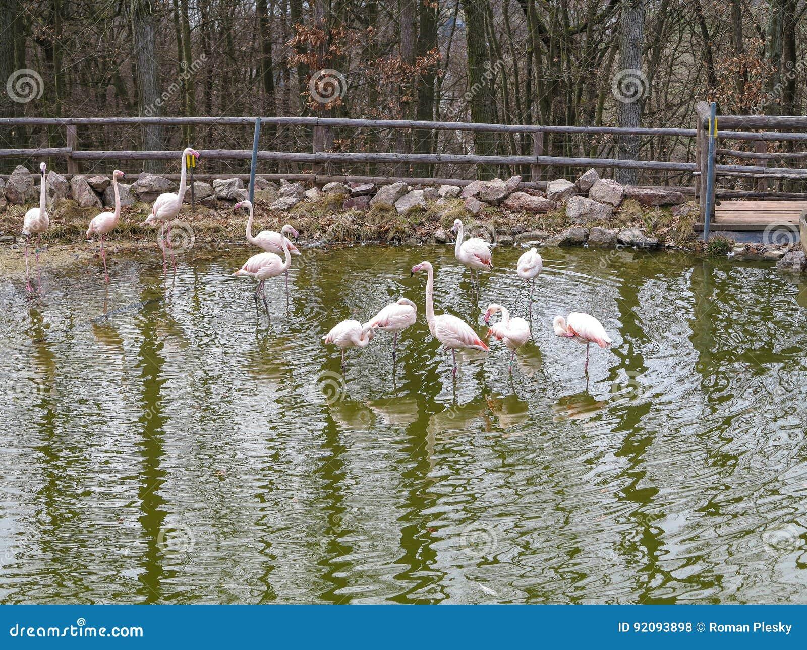 PARQUE ZOOLÓGICO Brno - centro de la fauna