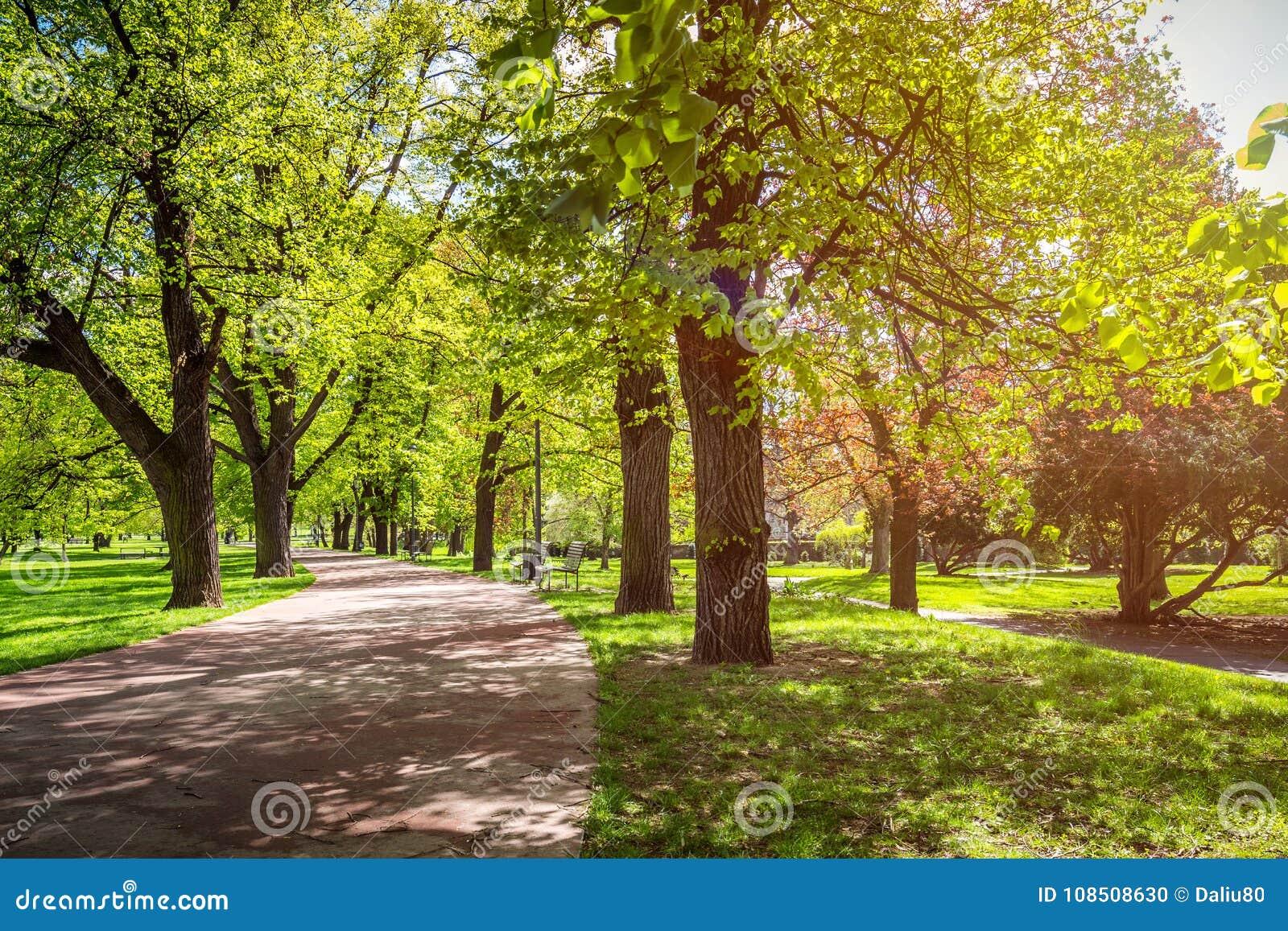Parquee en la primavera con el césped verde, luz del sol Camino de piedra adentro