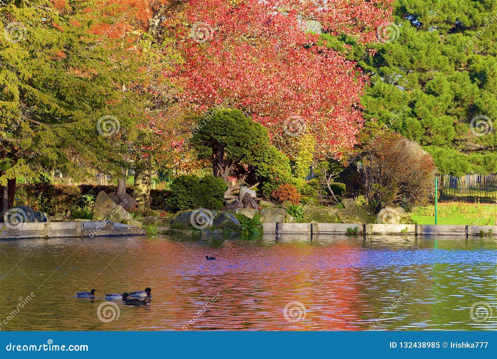 Parques en otoño, Inglaterra de Londres