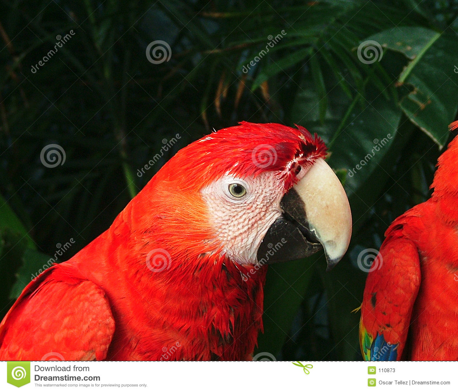Download Parrot stock image. Image of jungle, beak, mexico, animal - 110873