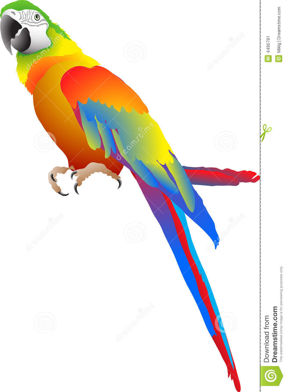 Isolated torpical parrot vector illustration.