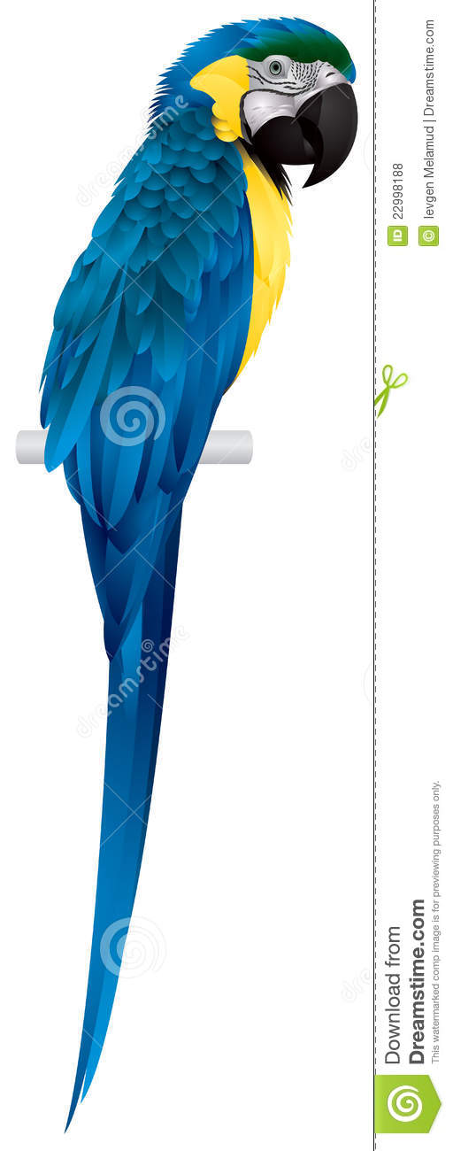 ... , Blue-and-Yellow Macaw Royalty Free Stock Photos - Image: 22998188