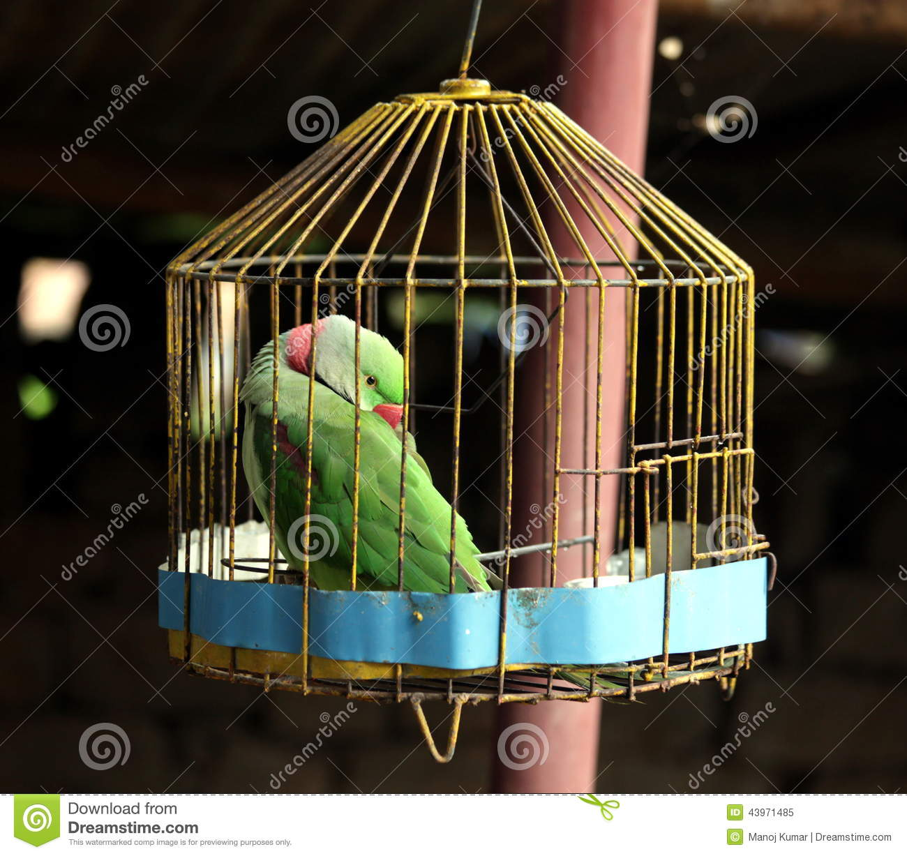 parrot in cage stock image image of talking bird cage 43971485