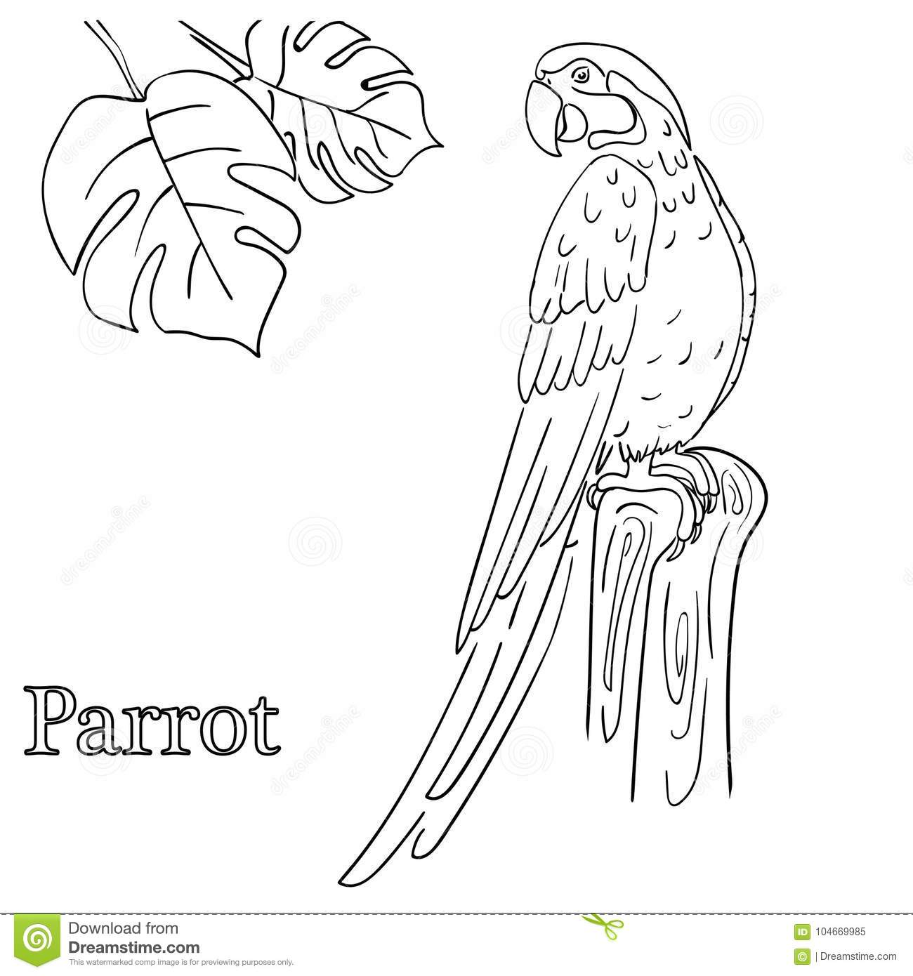 Parrot Coloring Pages For Children EPS 10 Stock Vector ...