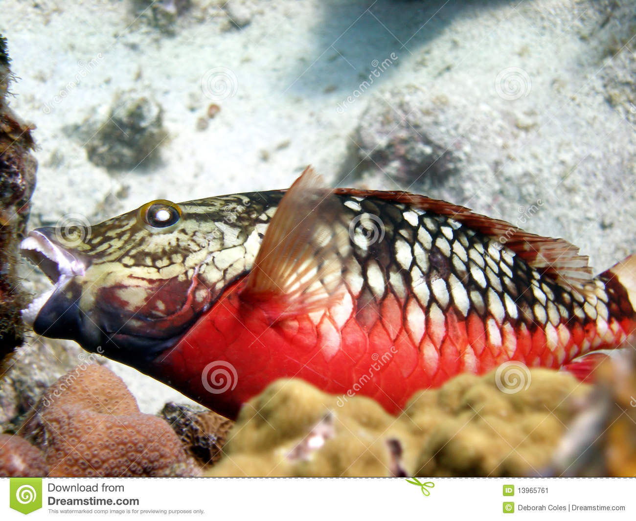 Colour Fish Stock Photos - Royalty Free Pictures