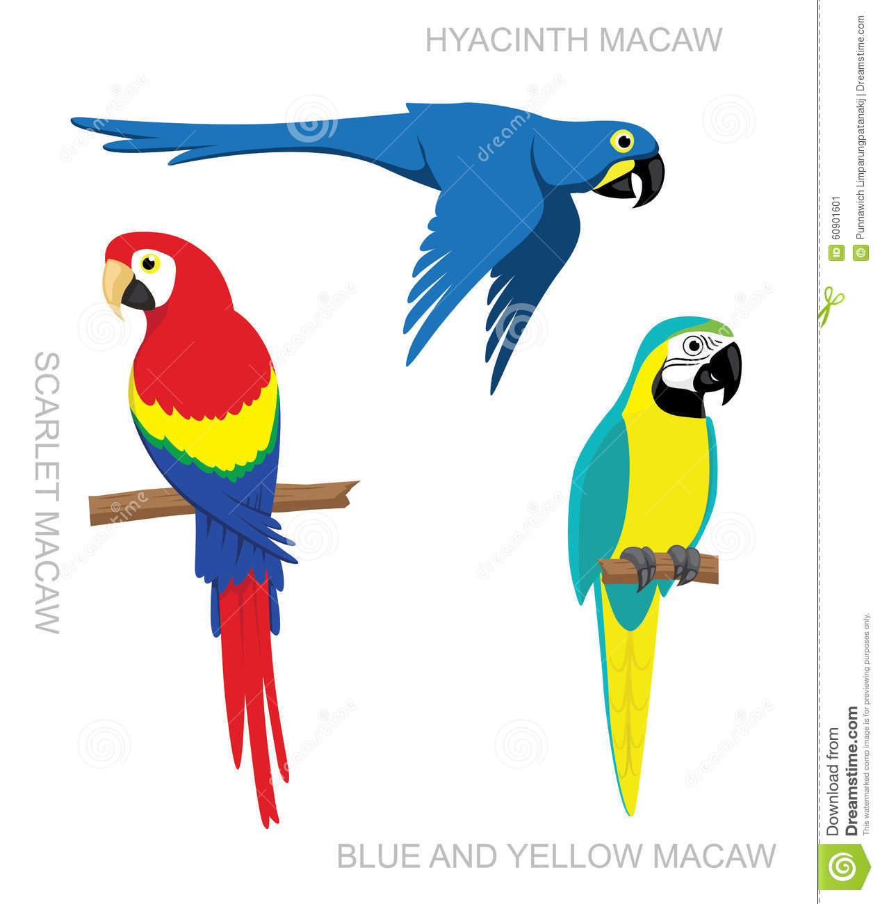 Parrot macaw cartoon stock vector image 60901601 - Dessin perroquet facile ...