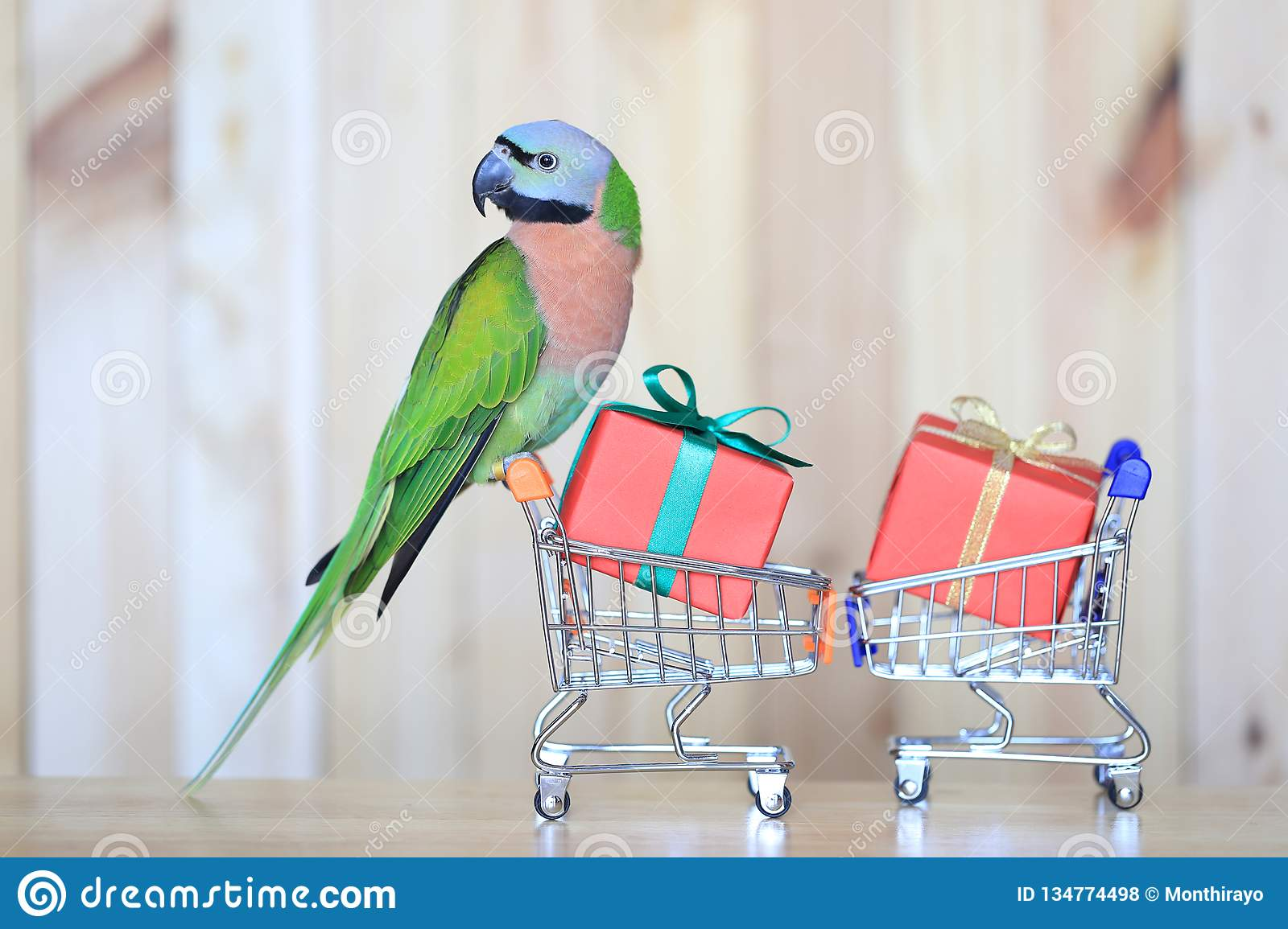 Parrot On Model Miniature Shopping Cart And Colorful Gift Box For