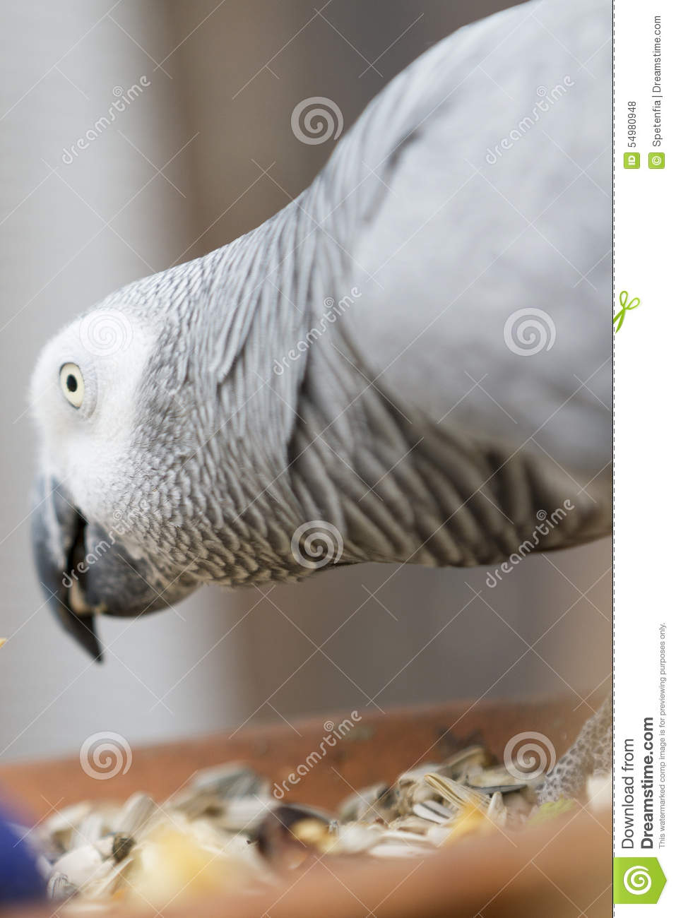 Parrot on perch