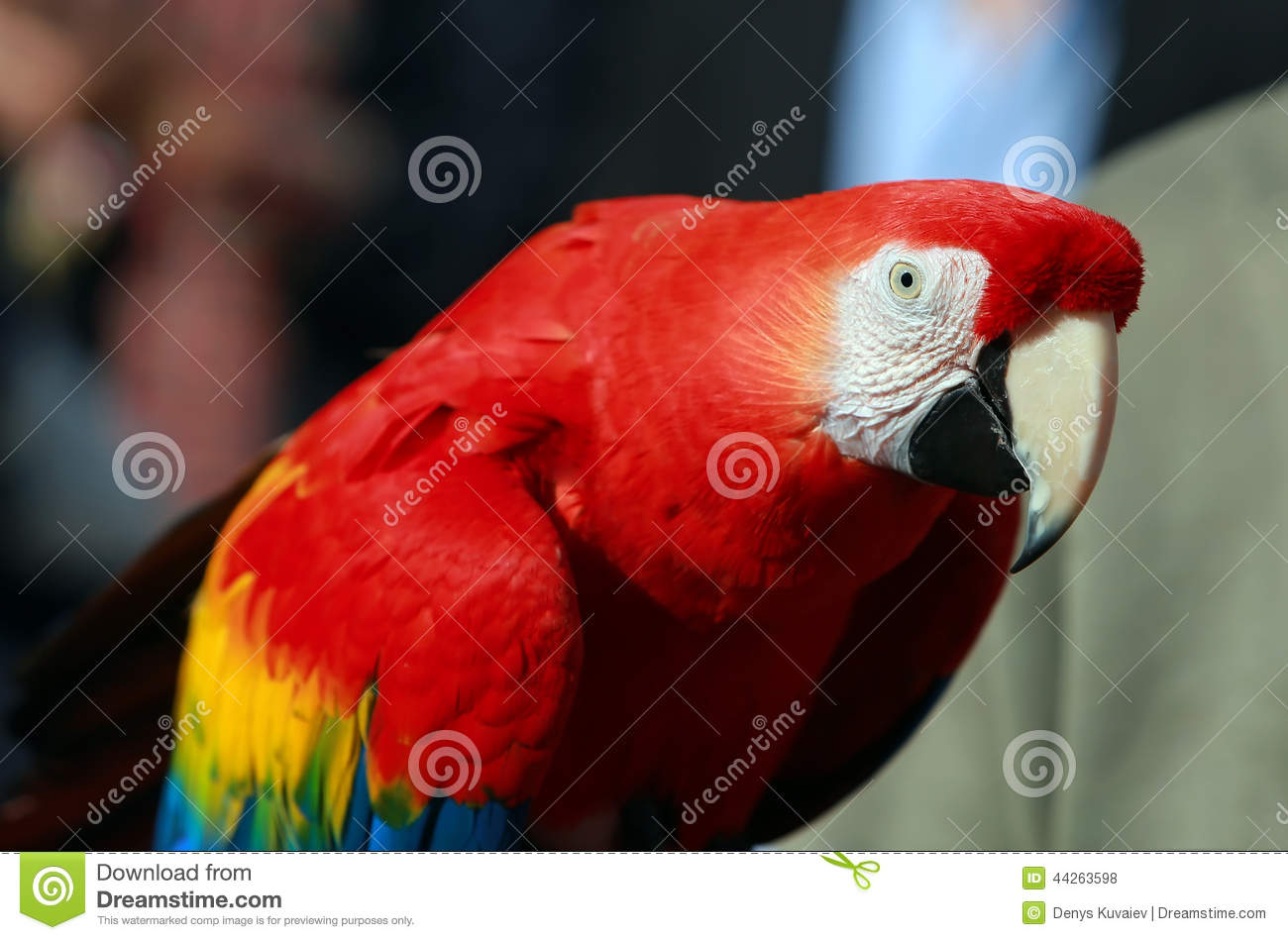 Macaw parrot red - photo#17