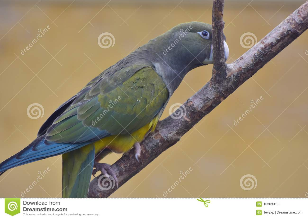 Parrot sitting on a branch