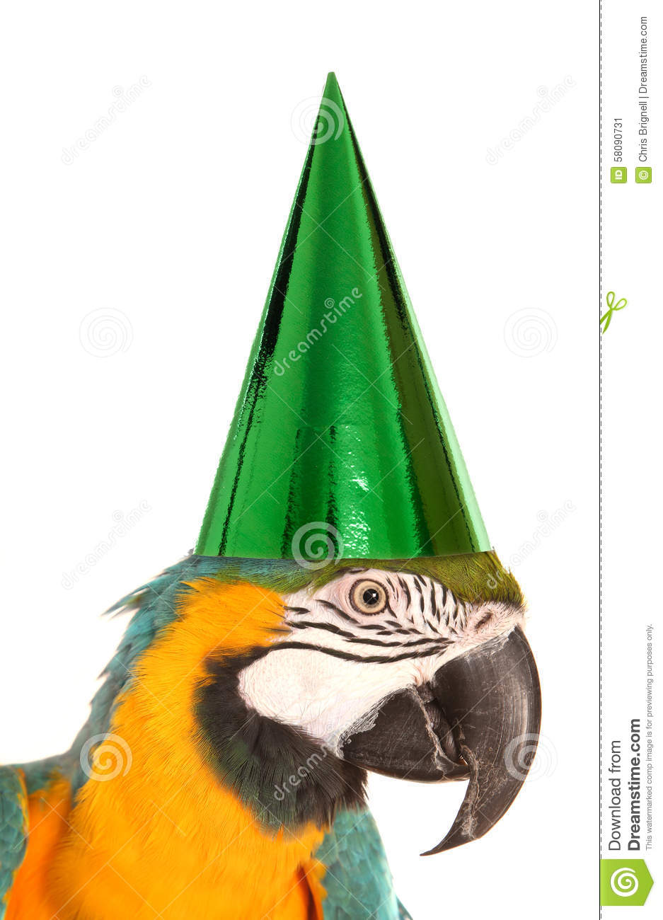 Parrot wearing a birthday party hat