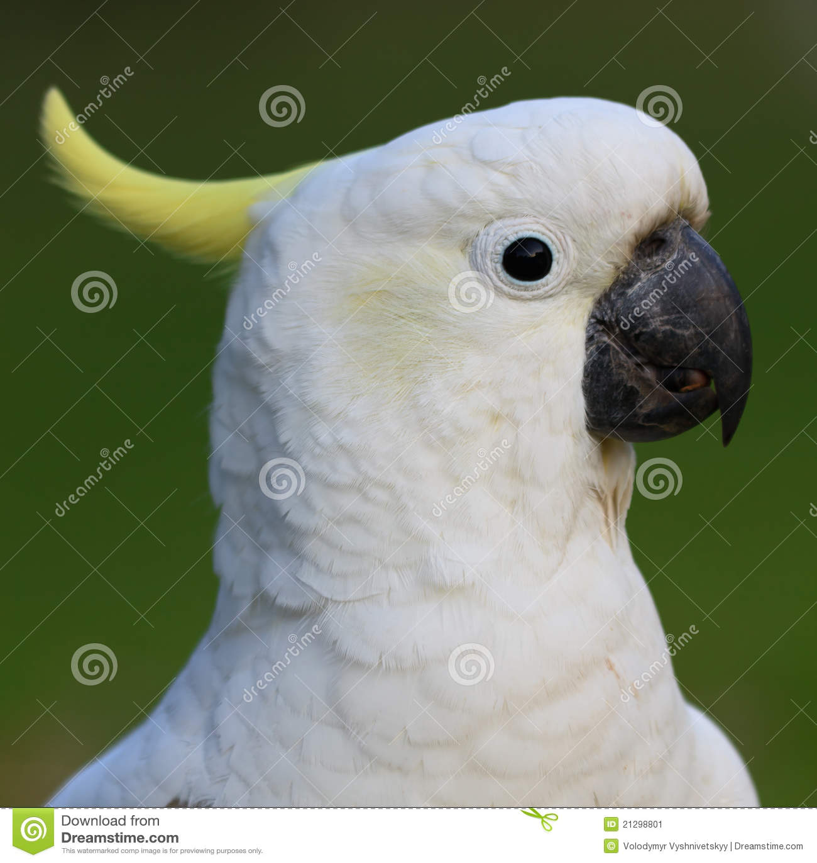The Villages Parrot Head Club Website