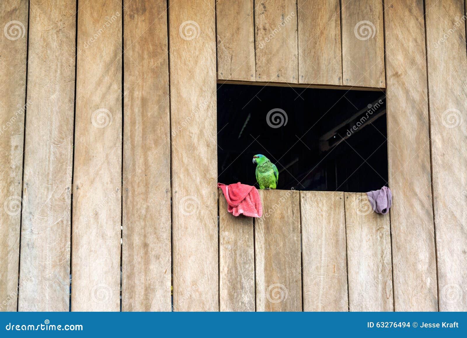 Parrot in a Window