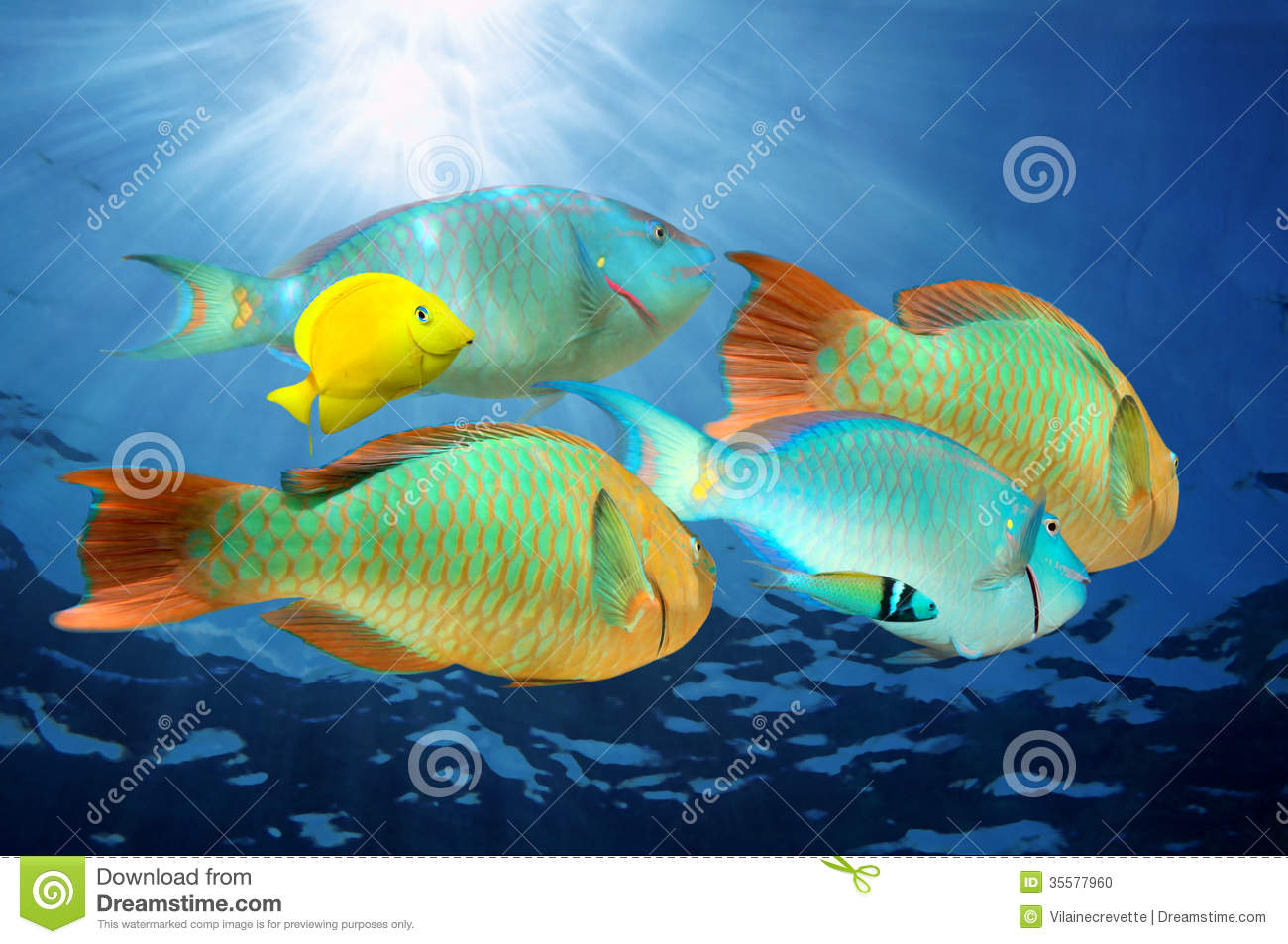 Parrotfish, colorful tropical fish with sunlight under water surface ...