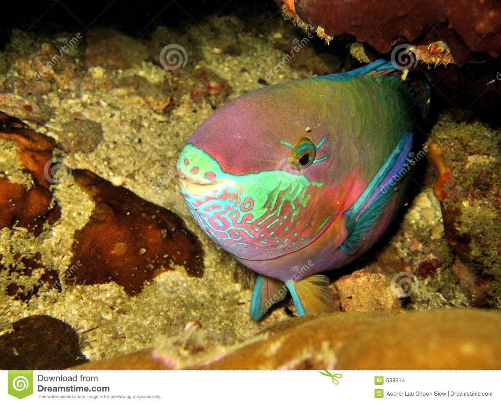 Parrotfish do sono