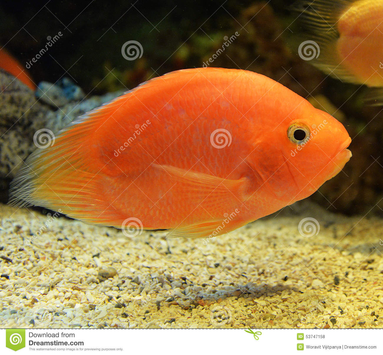 Parrotfish stock photo. Image of holiday, cretense, grey - 53747158