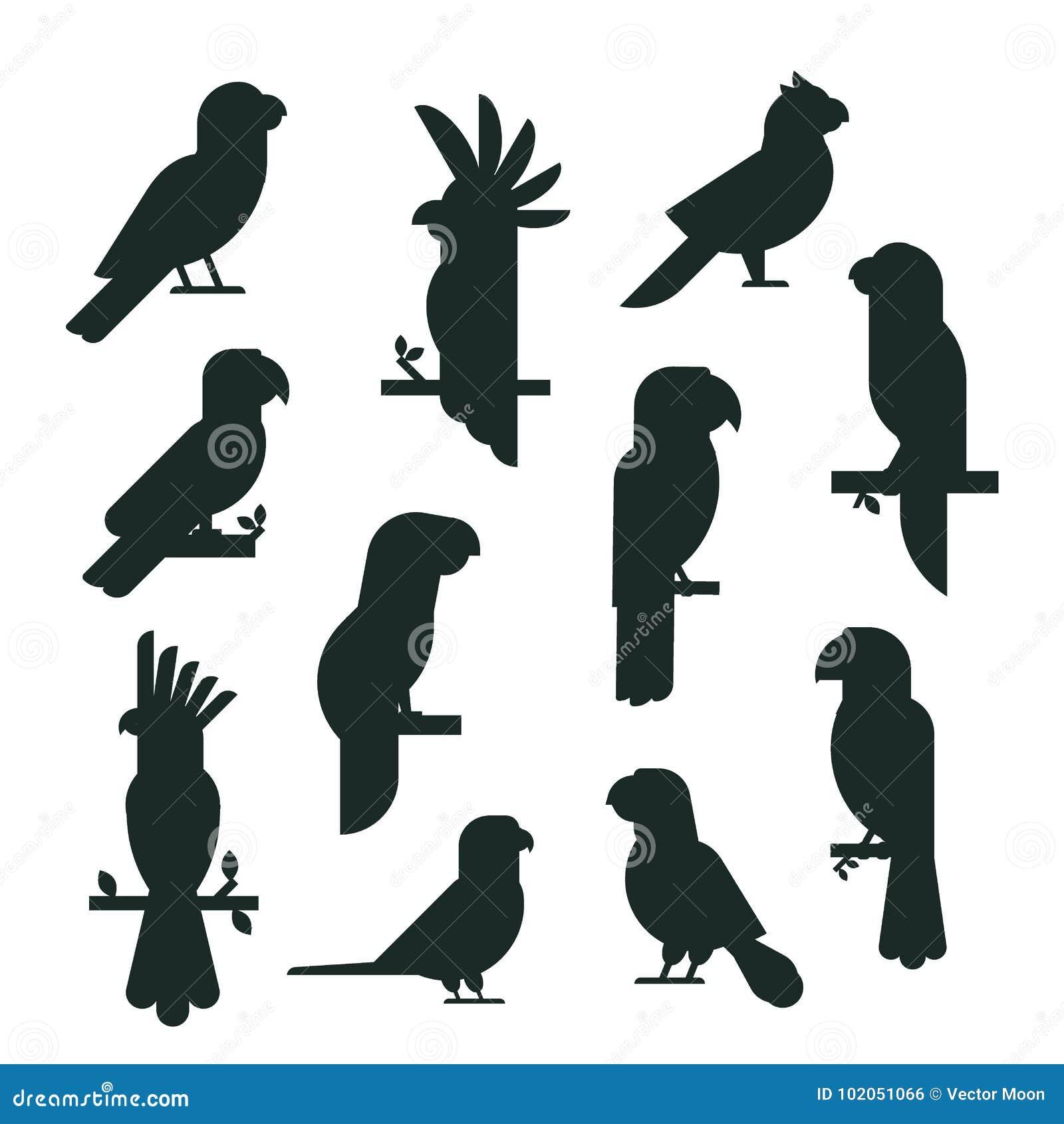 Parrots образования длиннохвостых попугаев животной природы силуэта птиц иллюстрация вектора любимчика черного тропического красо