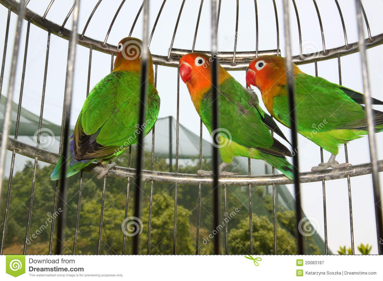 Parrots In Cage Stock Image Image Of Birds Tropical 20083187