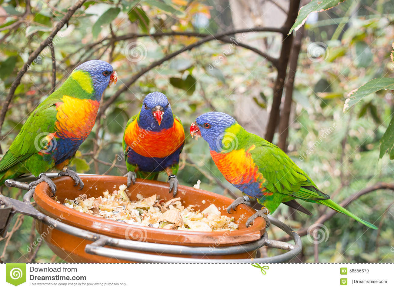 Parrots chatting and eating