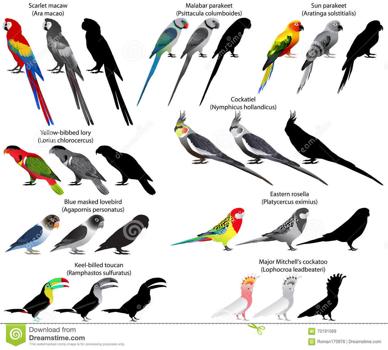 What is a vector species