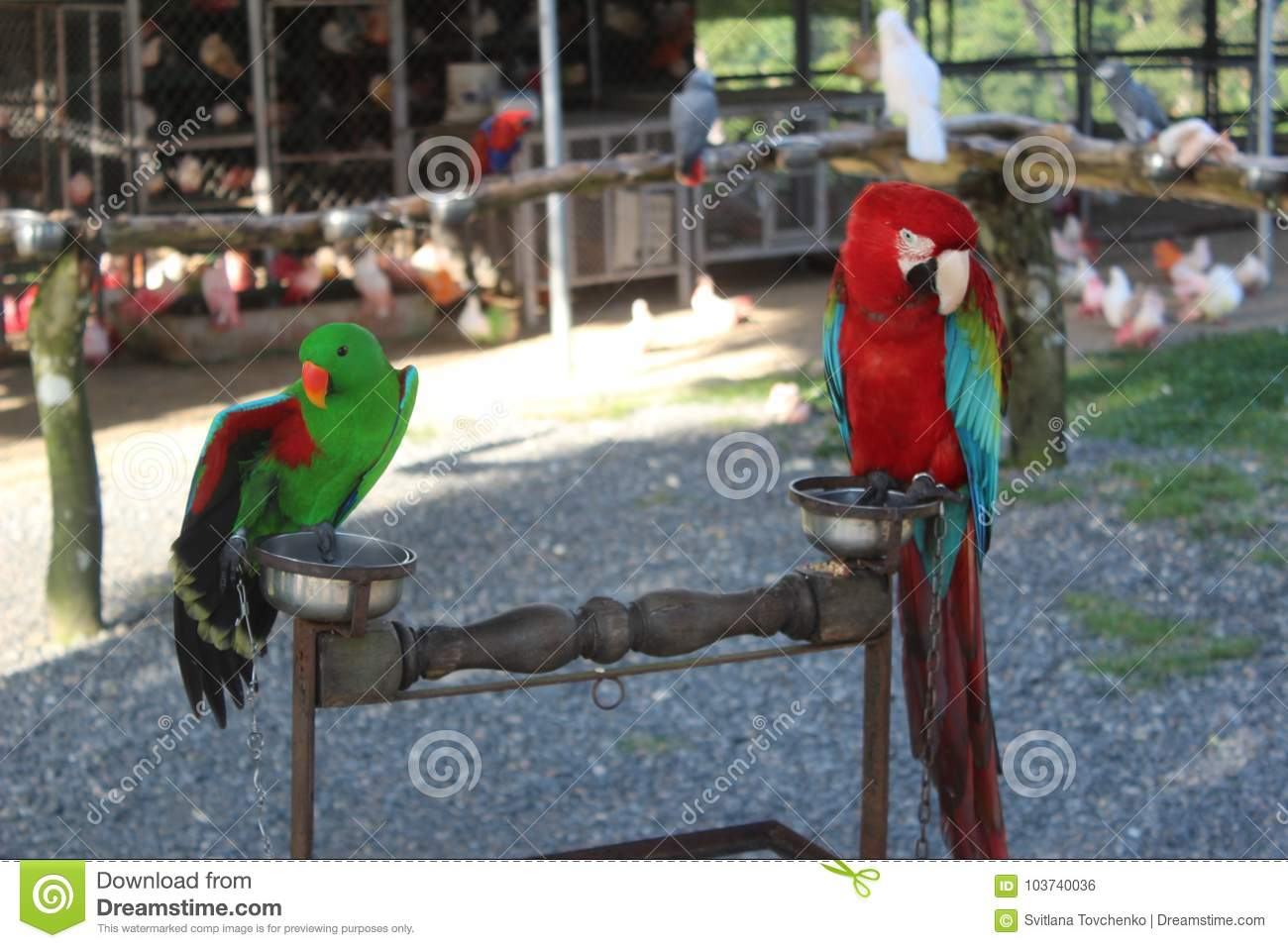 Parrots in the zoo