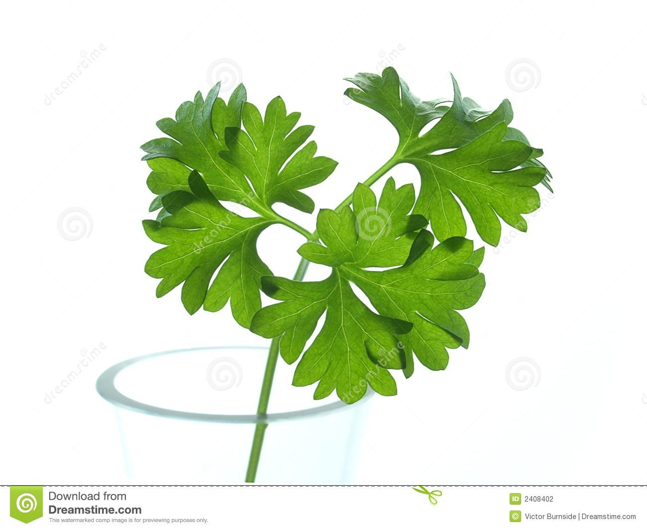 how to cook with fresh parsley