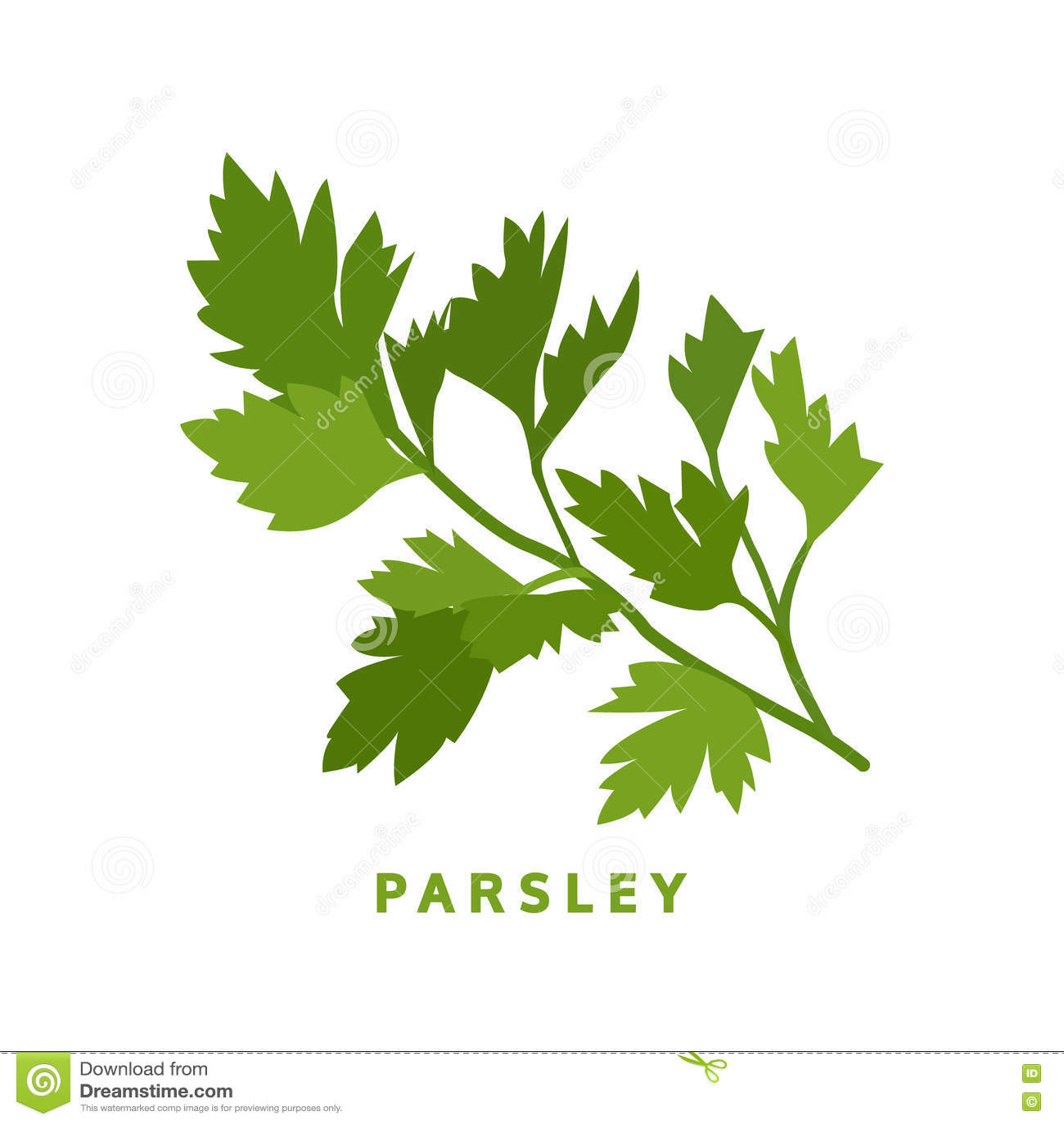 Parsley Illustration Parsley Herb, Food Vec...