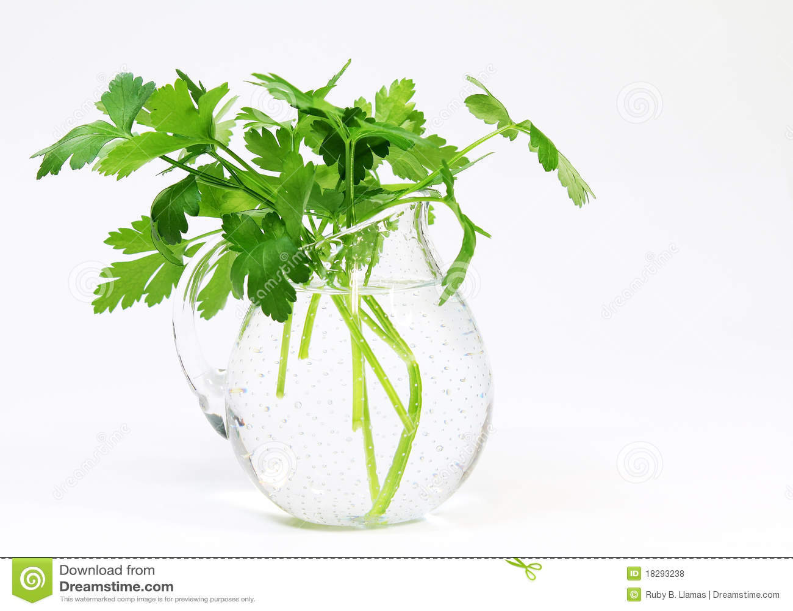Parsley (Petroselinum crispum) Vase