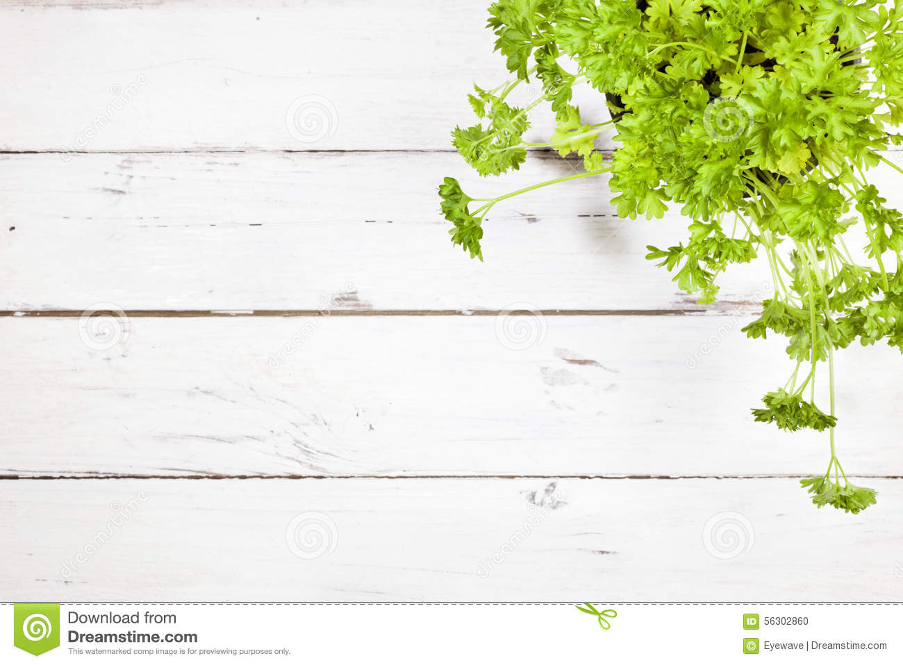 Angle Copy High Parsley Plant Rustic Space Table Top View White ...