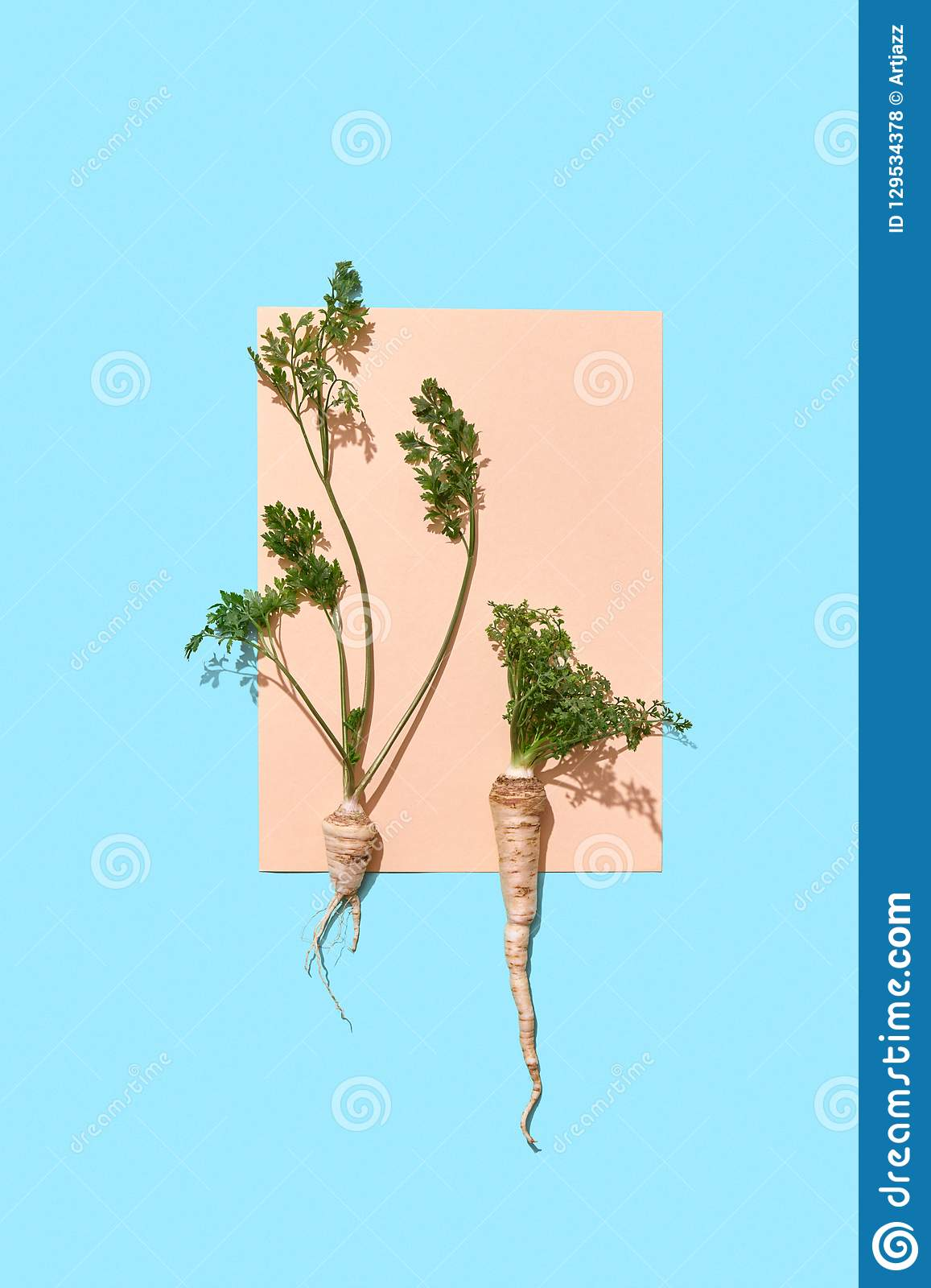 Parsley Roots With Green Stems Decorate A Piece Of Paper ...
