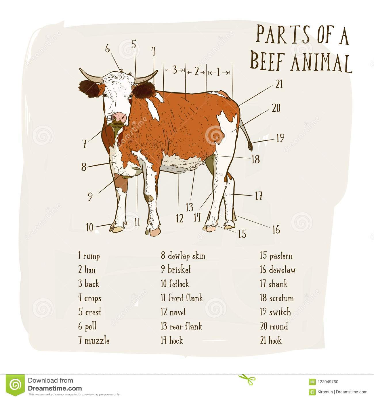 Download Part Of Beef Cow In Graphic Style Hand Draw Vector Stock