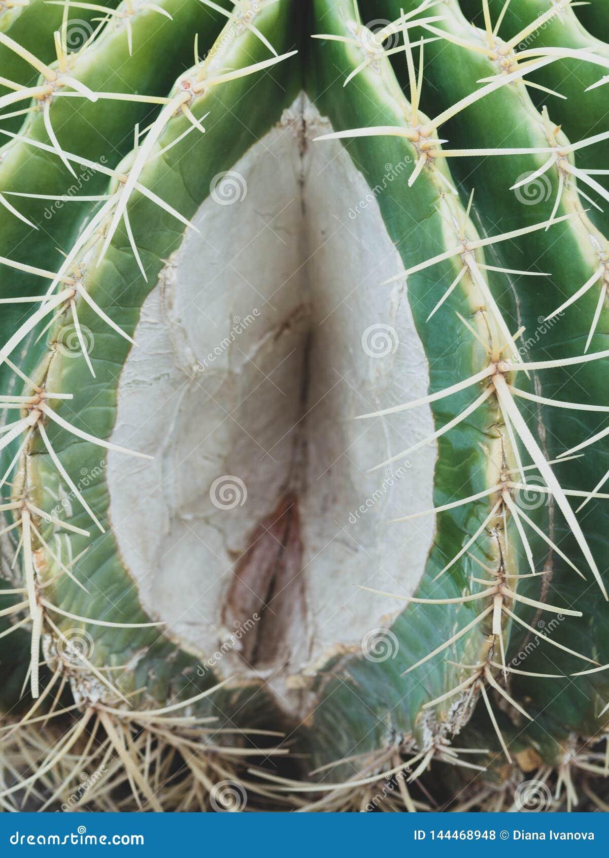 Pussy cactus in TORTURISER