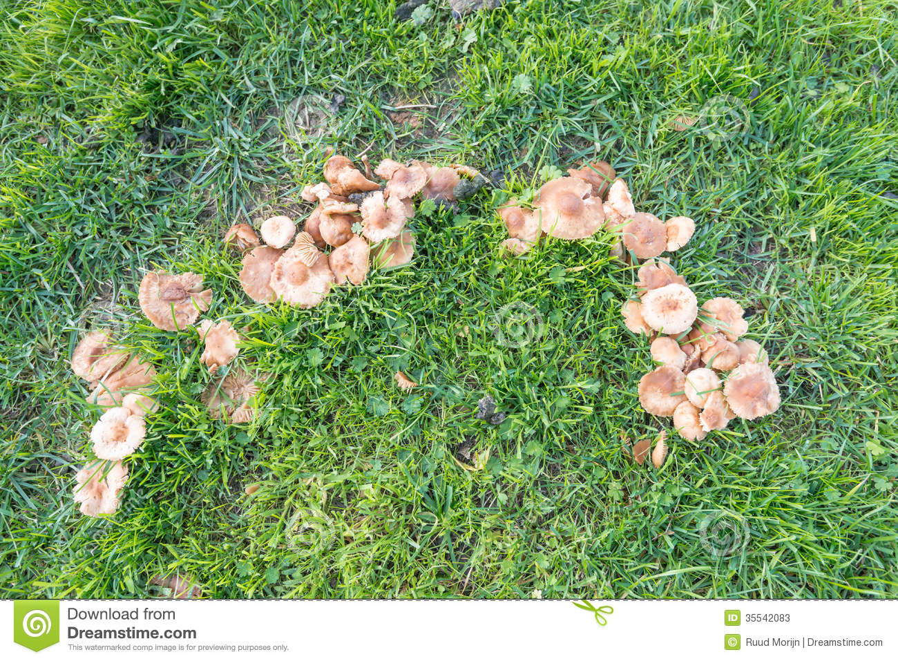 part of a fairy ring of mushrooms stock photos image free elf clipart pictures free elf clipart pictures
