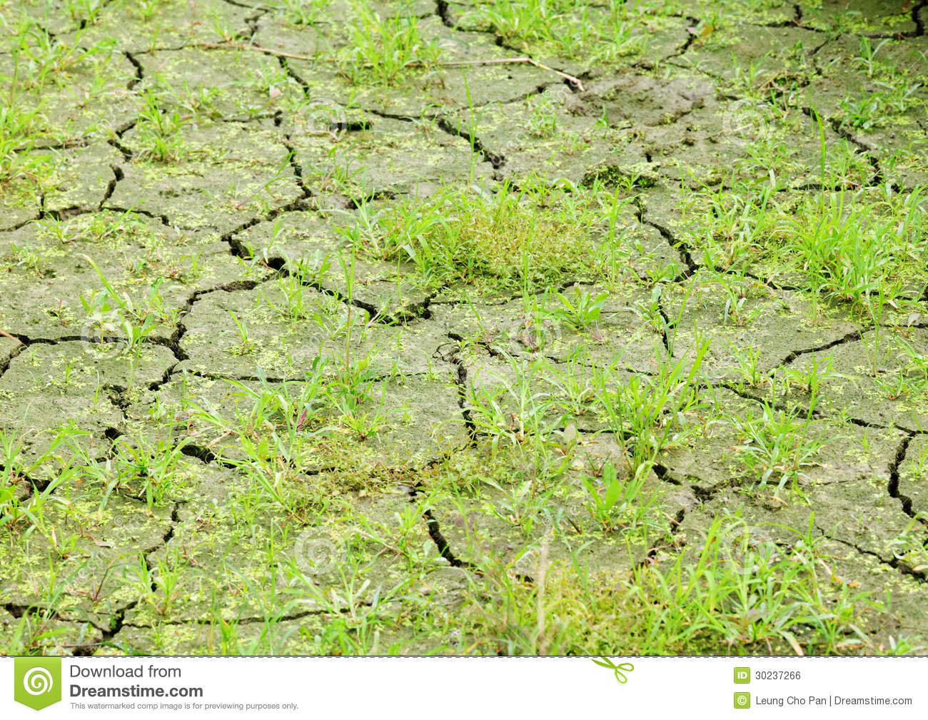 Green grass on cracked earth