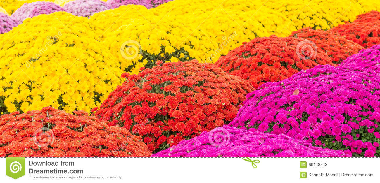 royaltyfree stock photo download part sun and shade flowers