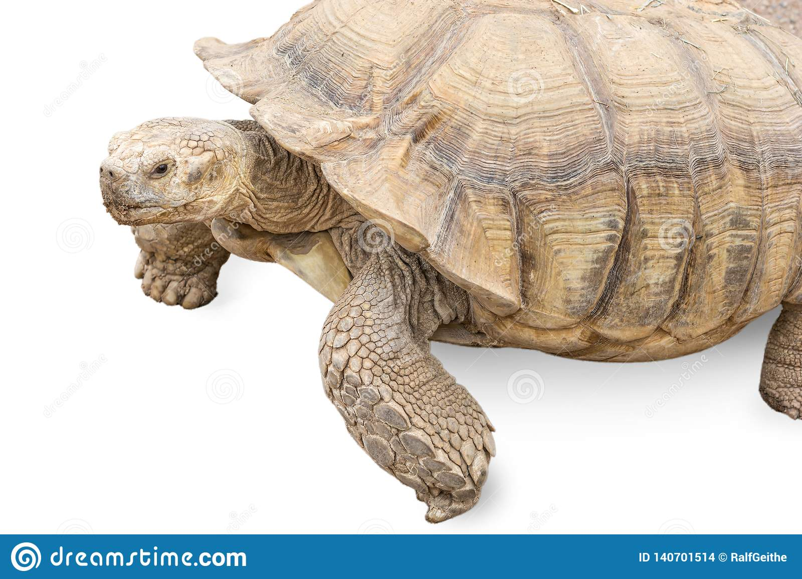 Isolated turtle as a metaphor for slowness and time management