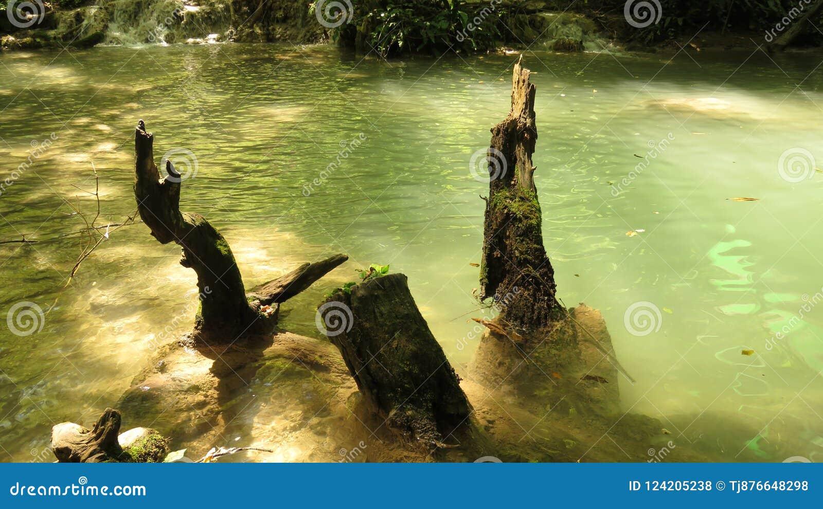 Parte da cascata Krushuna Bulgária da cachoeira no verão