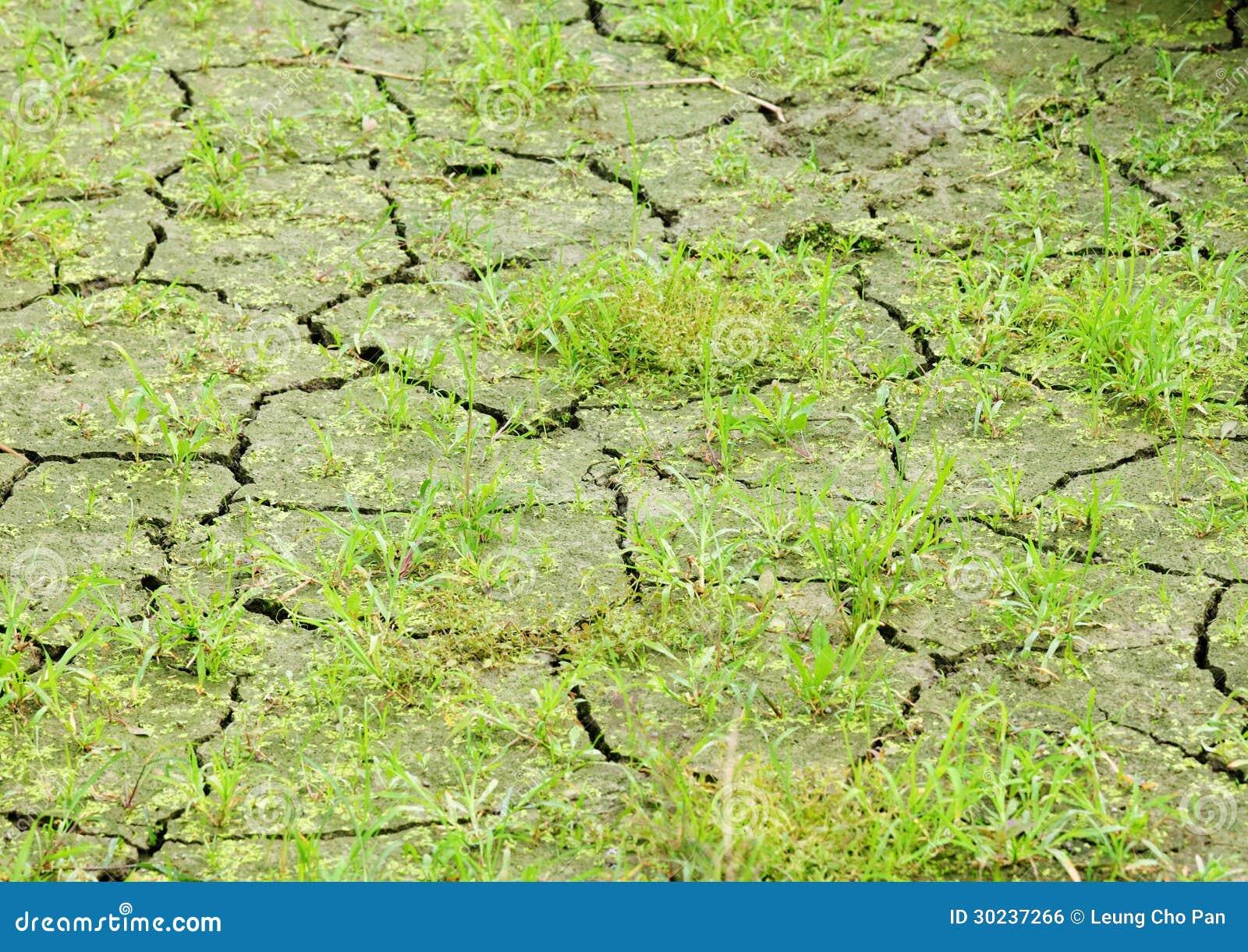 Grama verde em terra rachada