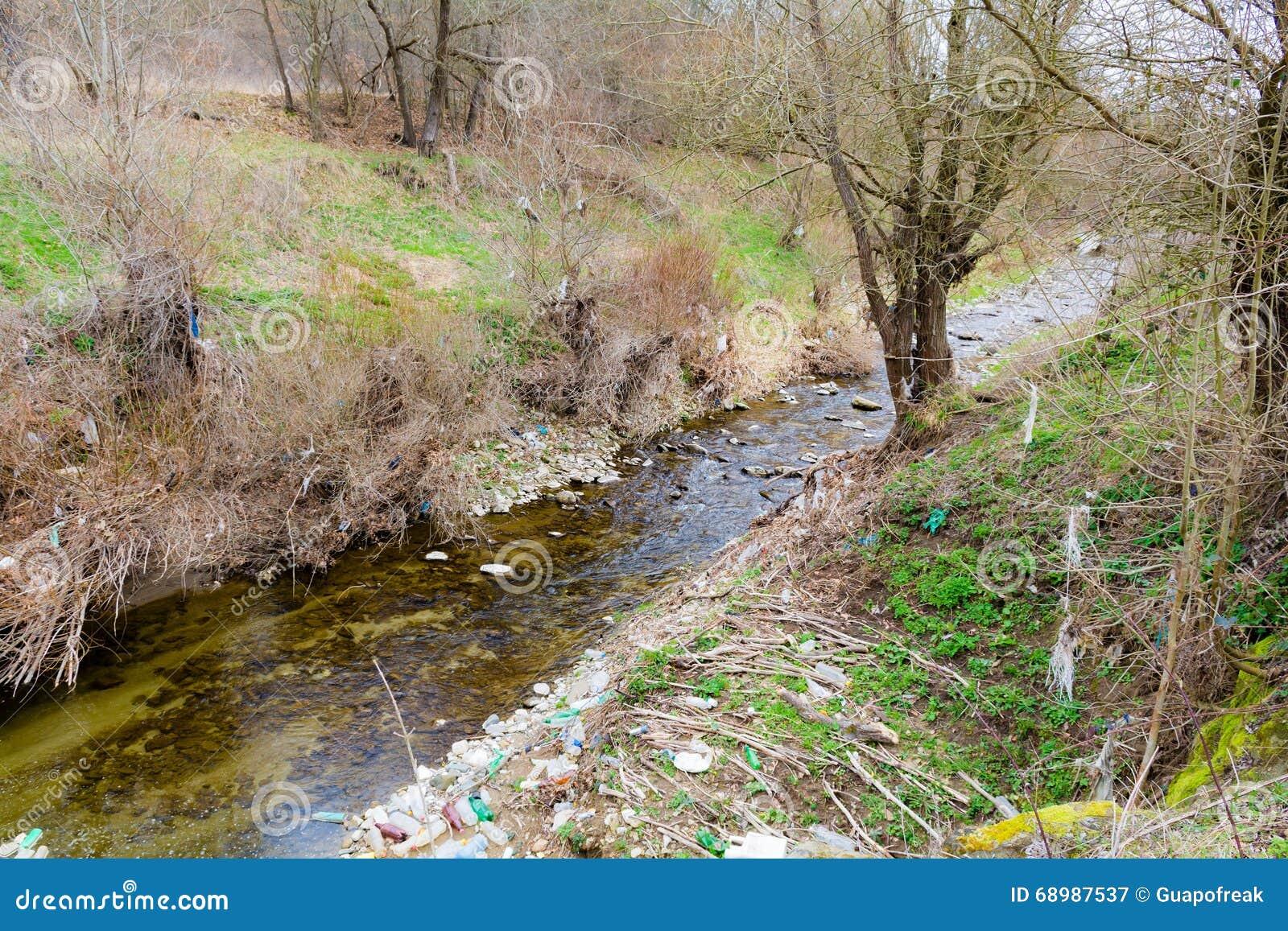Parte del río seco en el bosque durante la primavera