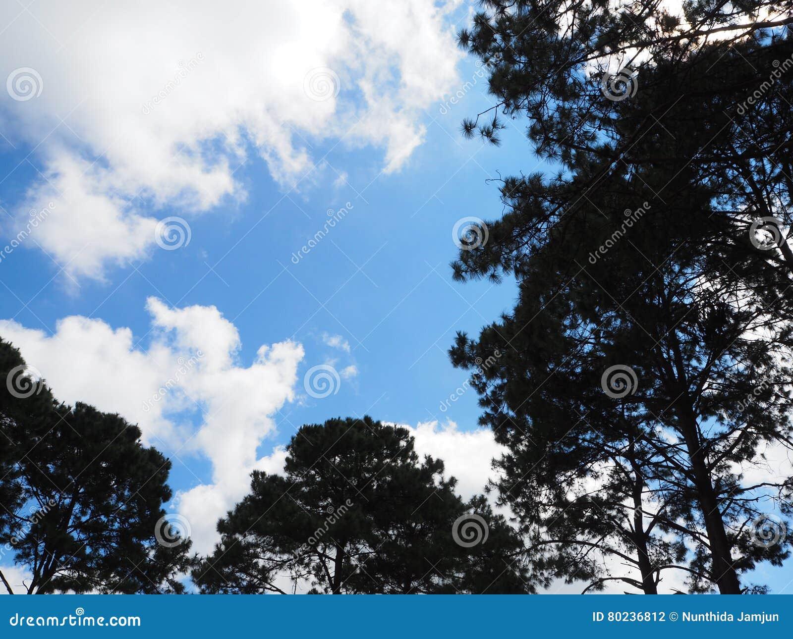 Parte inferior del árbol de la luz de cielo