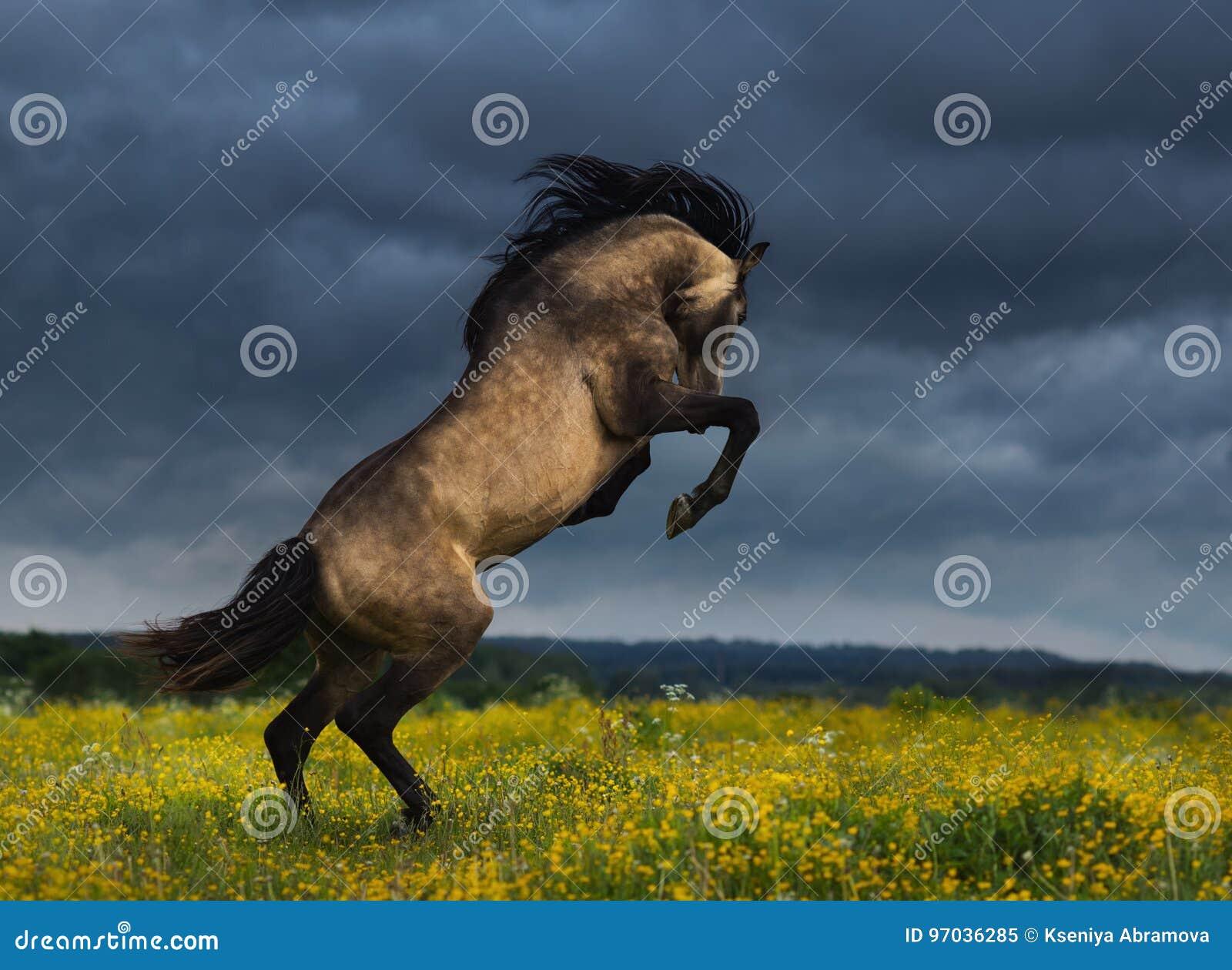 Parte posterior andaluz criada en línea pura del caballo en prado con el revestimiento dramático