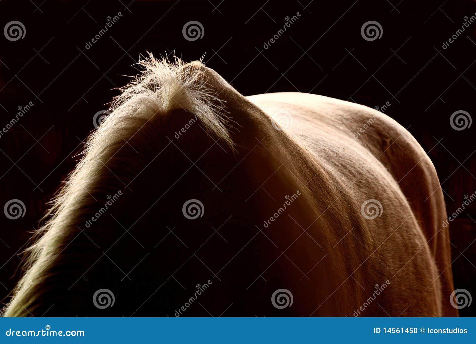 Parte posterior y melena del caballo en la oscuridad