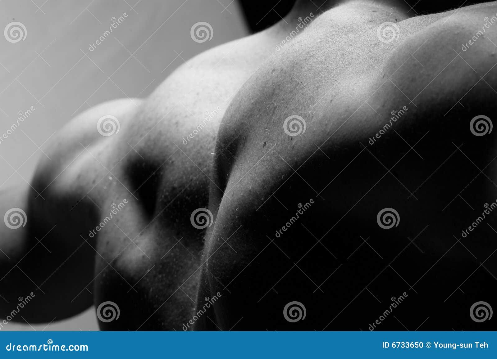 Parte posteriore muscolare