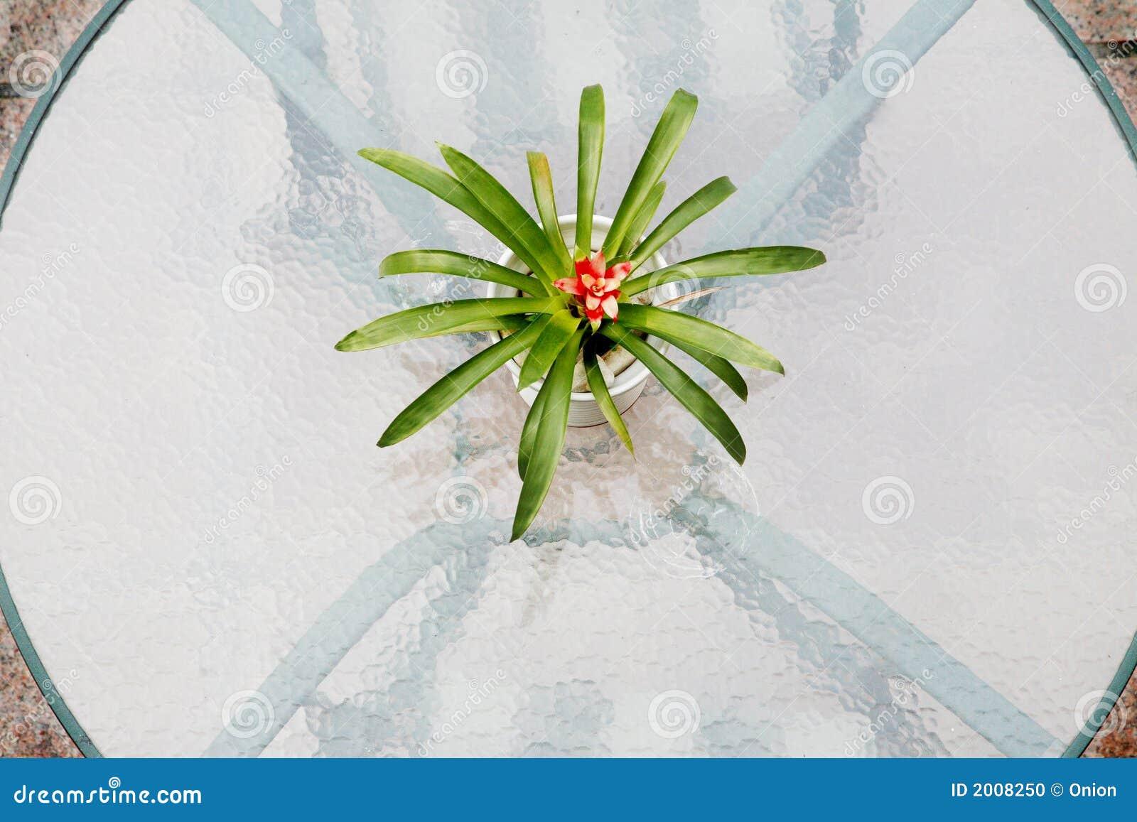 Parte superior de tabela de vidro com planta