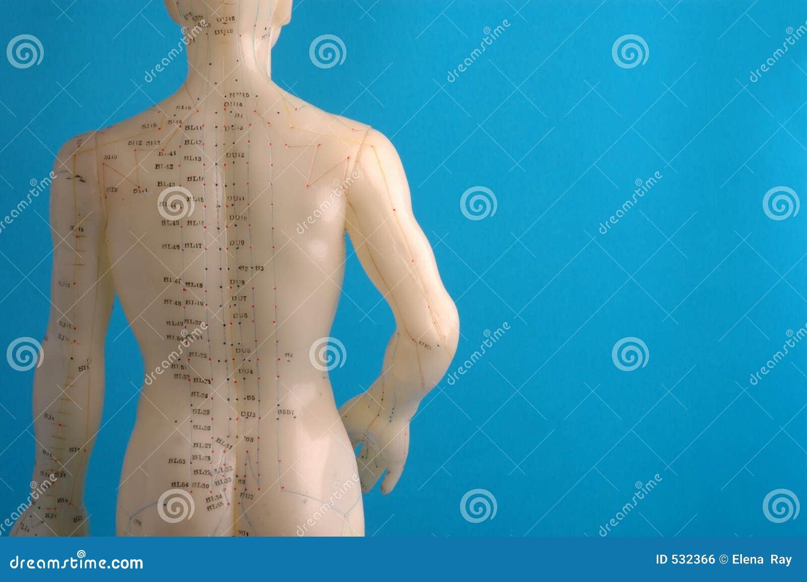 Parte traseira do modelo da acupunctura