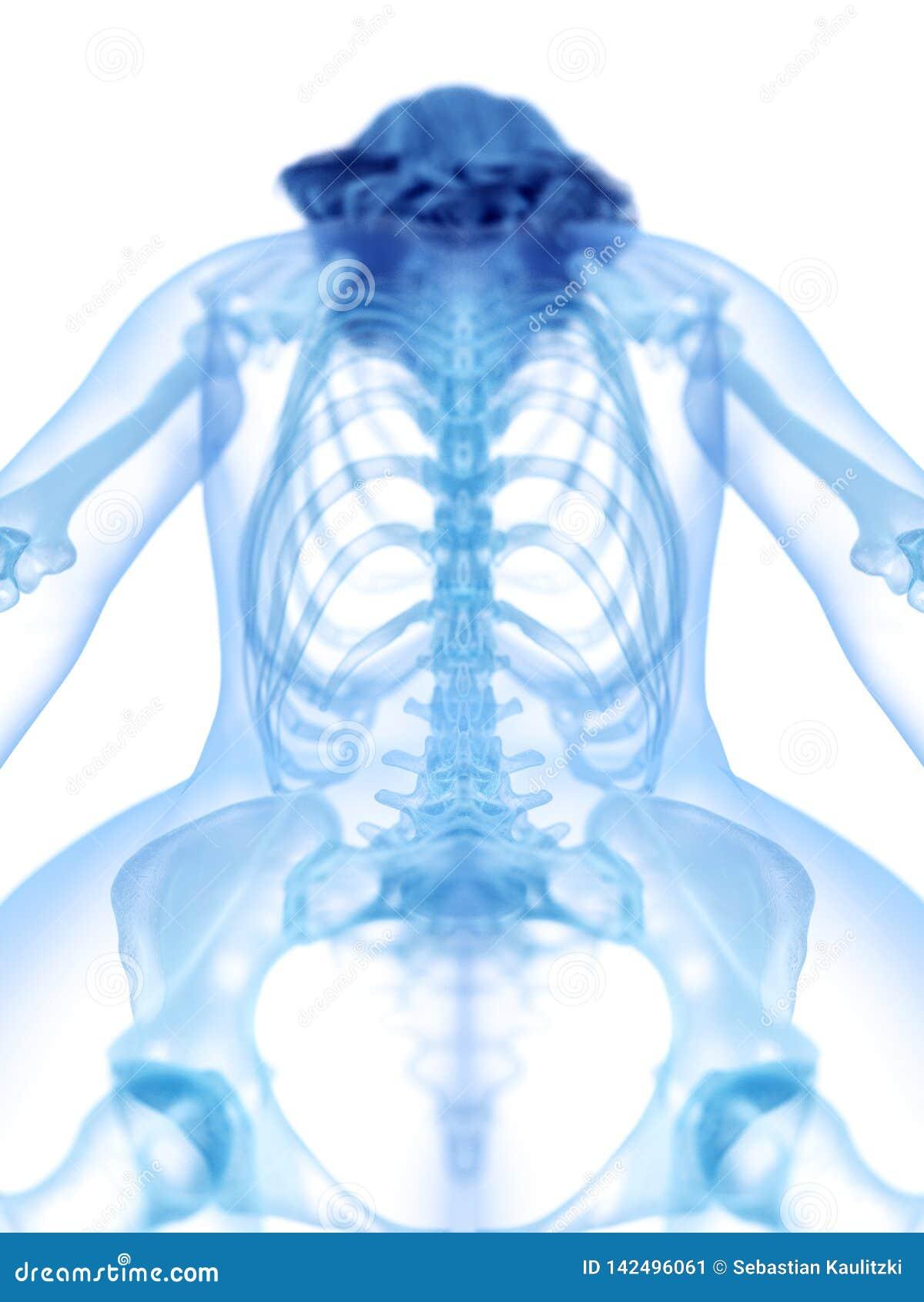 A parte traseira esqueletal