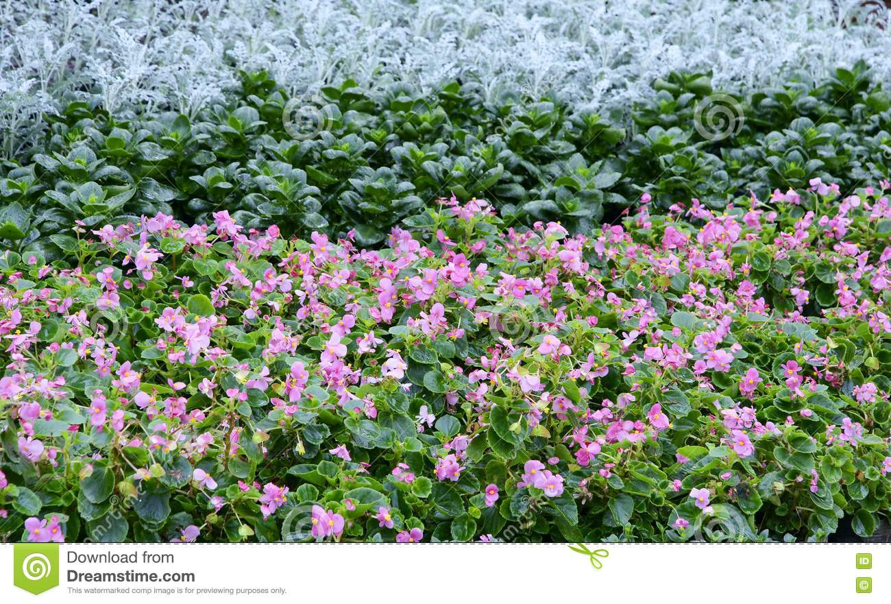 Parterre royalty free stock image image 21967766 for Parterre 3d