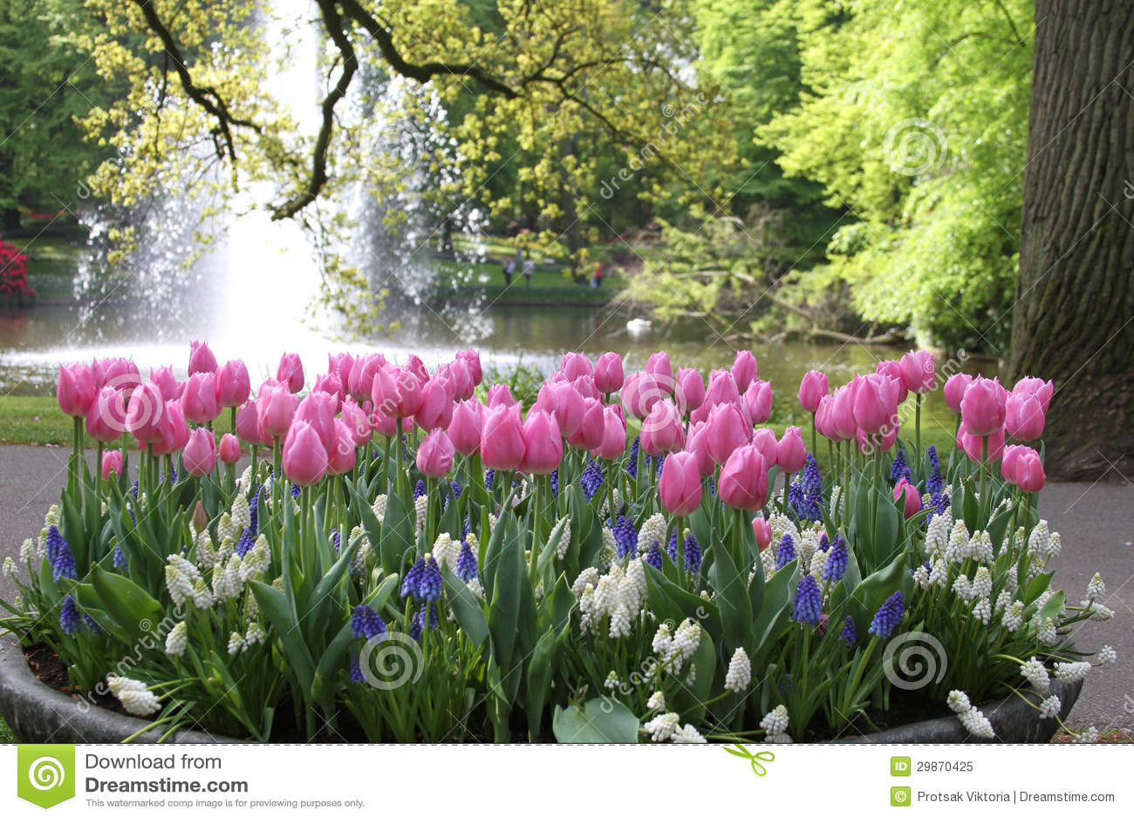 Parterre avec des tulipes