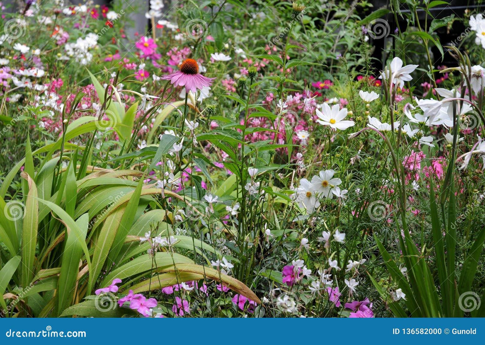 Parterre avec les fleurs de floraison merveilleuses d été